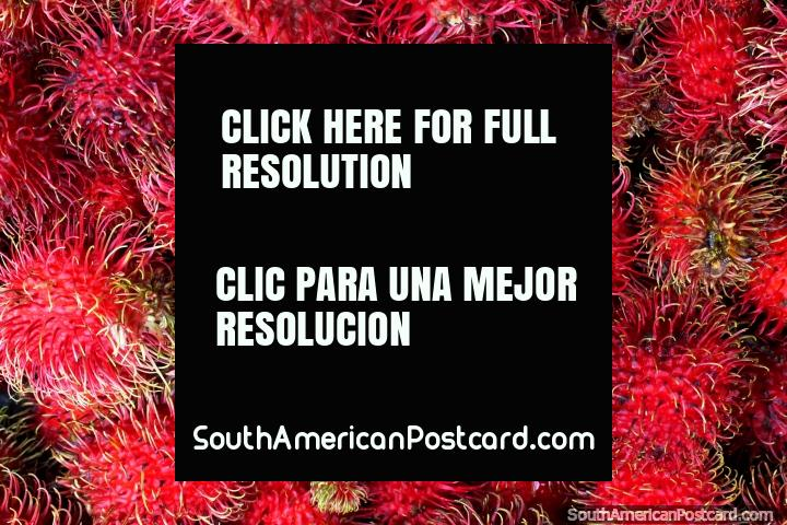 Punta roja rambután de cerca, un fruto de Asia vendido en los mercados en Cayenne, Guayana Francesa. (720x480px). Las 3 Guayanas, Sudamerica.