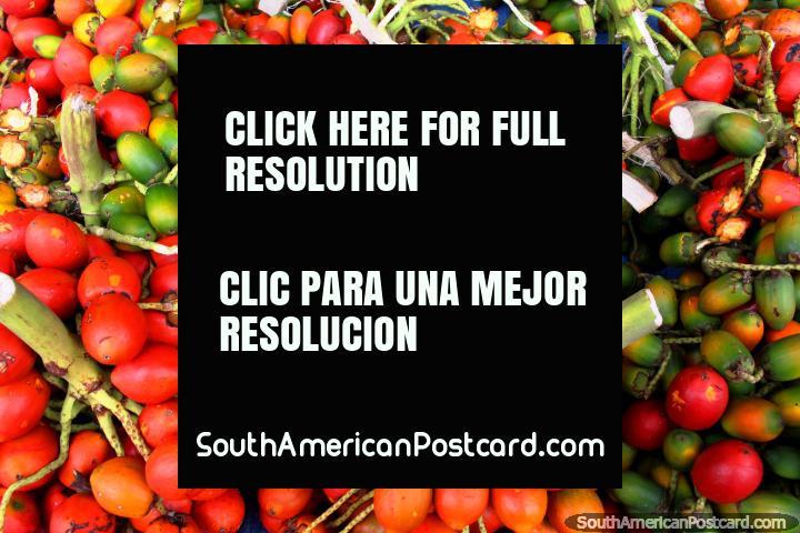 Chiles verdes presumo Roja y venden en los mercados en Cayenne, Guayana Francesa. (720x480px). Las 3 Guayanas, Sudamerica.