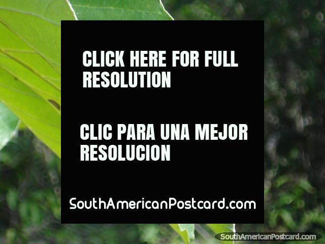Borboleta colorida em uma folha, parque nacional Iguaçu. (640x480px). Argentina, América do Sul.
