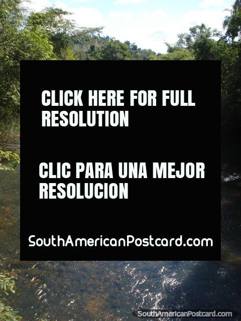 Várias espécies únicas do peixe vivem no superior de rio em cima de cachoeiras de Iguaçu. (480x640px). Argentina, América do Sul.