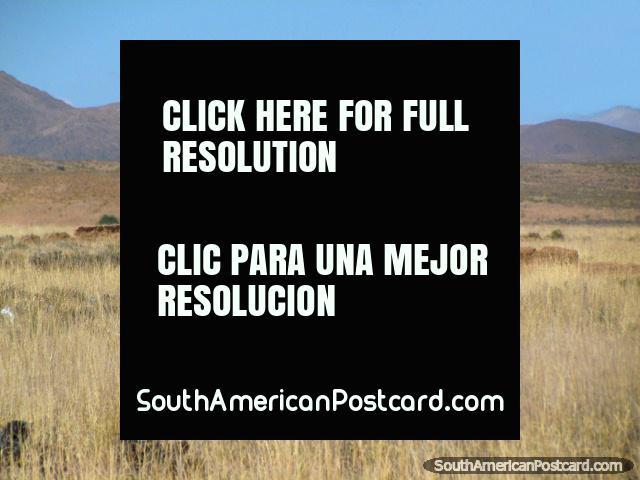 Horses in a field south of La Quiaca. (640x480px). Argentina, South America.