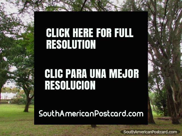 Shady tree area at Parque Quiros, one Colons main attractions. (640x480px). Argentina, South America.