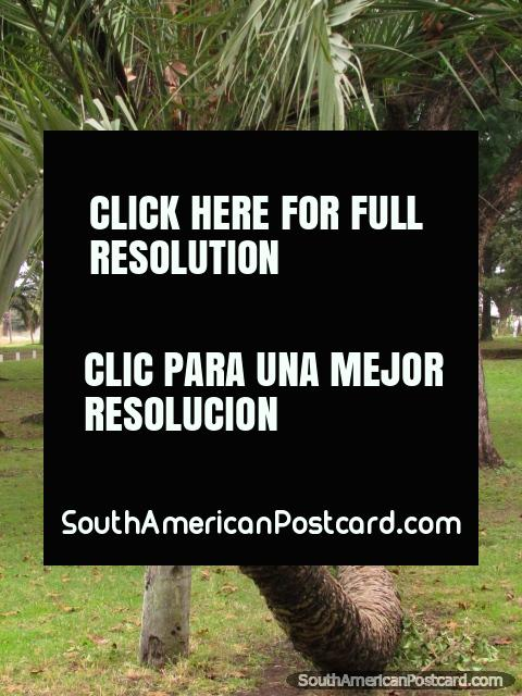 Parque Quiros, um belo parque de marcha e atividades em Colon. (480x640px). Argentina, América do Sul.