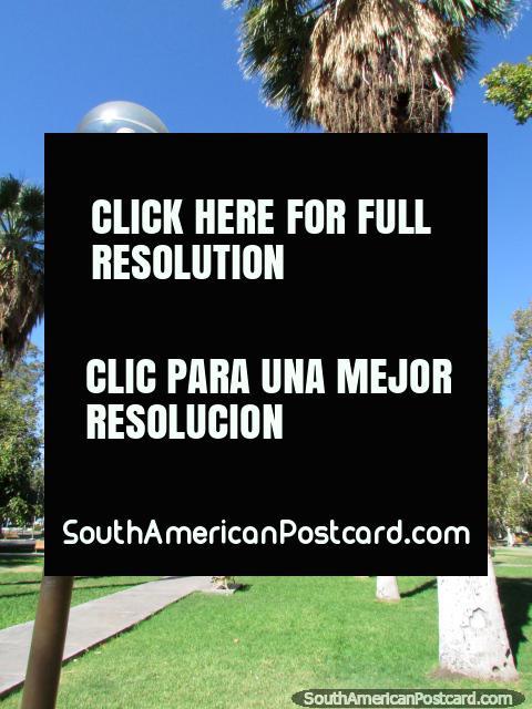 Linhas de palmeiras junto do caminho em Parque de Mayo em San Juan. (480x640px). Argentina, América do Sul.