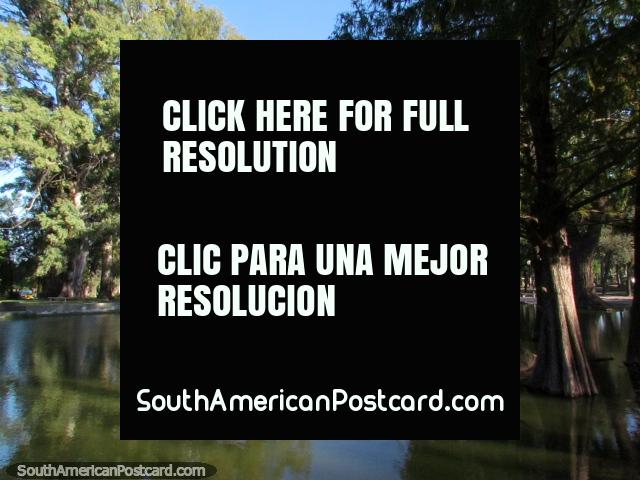 Log and tree in the lagoon at Parque Sarmiento in Cordoba. (640x480px). Argentina, South America.