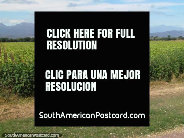 Colheita que cultiva païs ao sul de El Carril. (640x480px). Argentina, América do Sul.