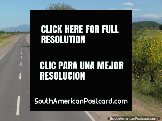 As flores de caminho e amarelas abertas nos campos alguns minutos ao sul de Coronel Moldes. (640x480px). Argentina, América do Sul.