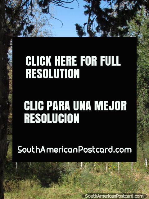 Olhar através de pampas e arbusto a montanhas distantes em Talapampa. (480x640px). Argentina, América do Sul.