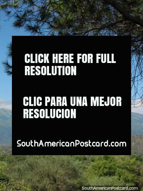 Naturaleza, árboles y colinas en Talapampa. (480x640px). Argentina, Sudamerica.