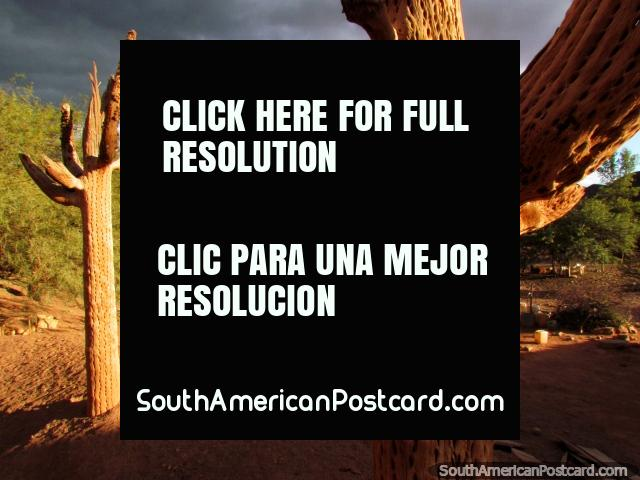 Dry dead cactus in the Quebrada de las Conchas in Cafayate. (640x480px). Argentina, South America.