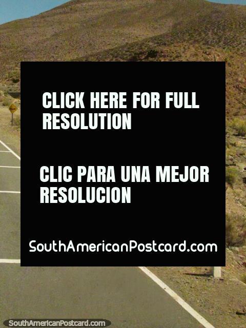 2 llamas, cruz blanca y marrón el camino, Paso de Jama. (480x640px). Argentina, Sudamerica.