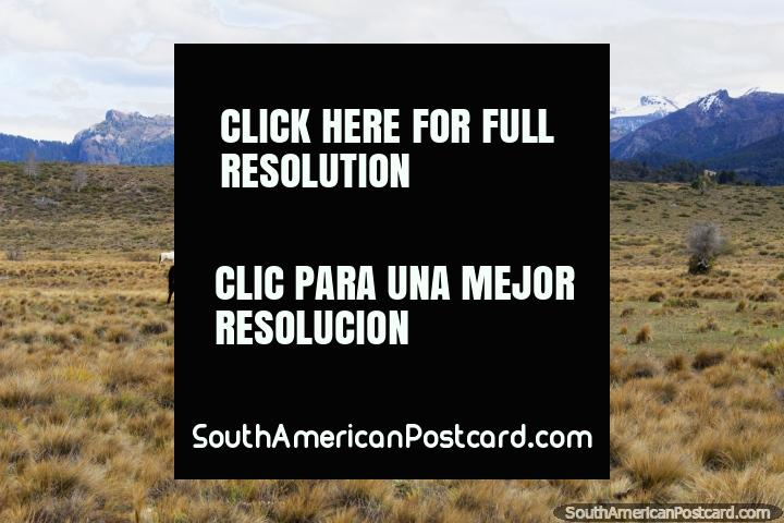 Caballos pastando a pocos kilómetros al este del Lago Traful en un desierto abierto. (720x480px). Argentina, Sudamerica.