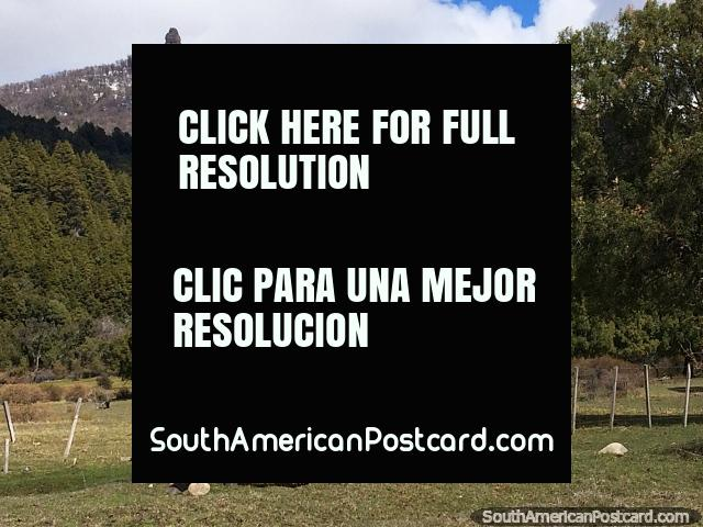 Caballos en el extremo oriental del Lago Traful pastan junto a la carretera en un entorno precioso. (640x480px). Argentina, Sudamerica.