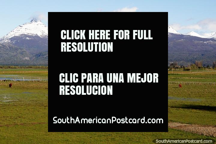 Cows grazing in the green pastures of Trevelin with snow-capped mountain ranges in the distance. (720x480px). Argentina, South America.