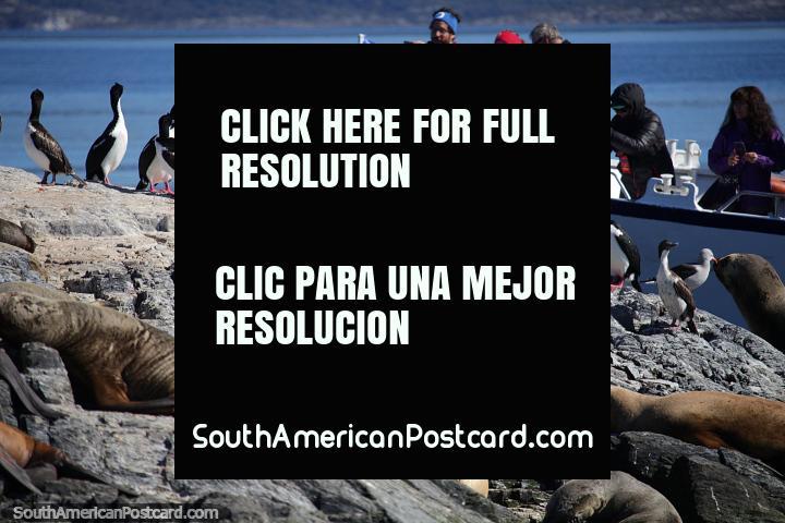 Haga un recorrido en bote por el puerto de Ushuaia para ver la vida salvaje. (720x480px). Argentina, Sudamerica.