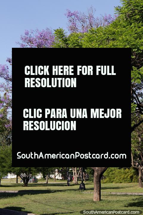 Árboles con hojas de color púrpura y un bonito paisaje cerca del río en Santa Fe. (480x720px). Argentina, Sudamerica.