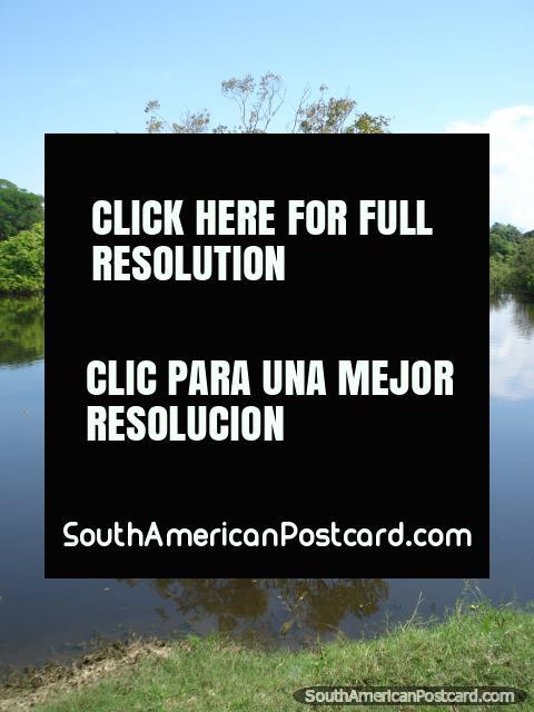 Reflexiones del árbol de pampa, Rurrenabaque. (480x640px). Bolivia, Sudamerica.