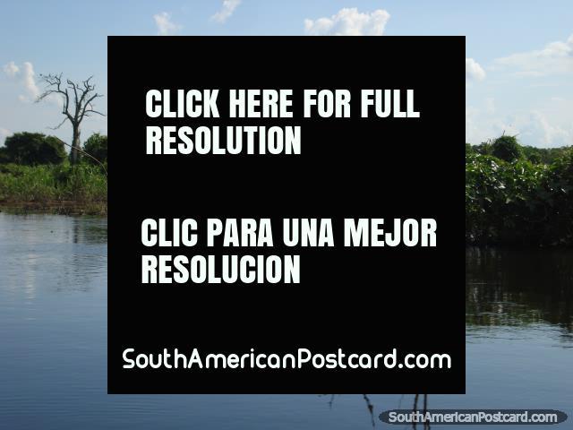 Los pantanos de pampa en Rurrenabaque son un páramo muy pacífico del agua, fauna y fauna. (640x480px). Bolivia, Sudamerica.
