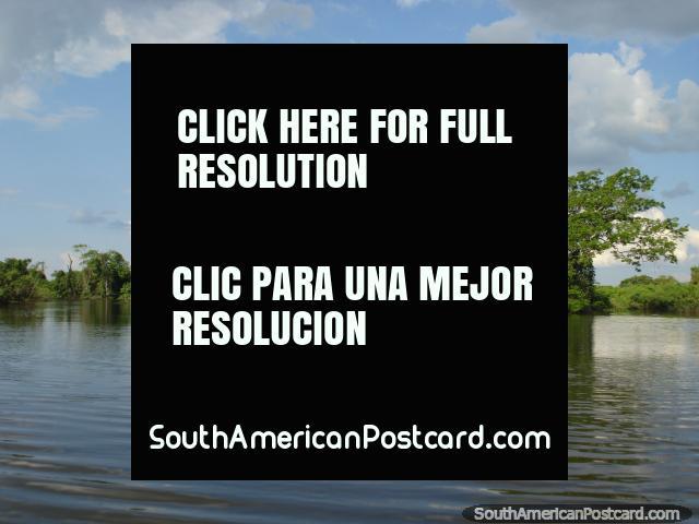 Aguas tranquilas y verde en Rurrenabaque. (640x480px). Bolivia, Sudamerica.