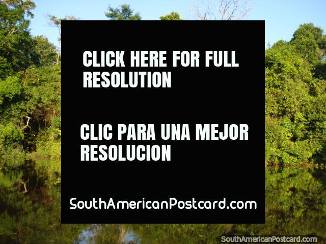 Verde y sus reflexiones sobre el río en Rurrenabaque. (640x480px). Bolivia, Sudamerica.