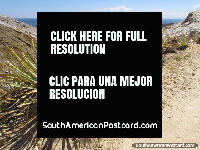 Desert plants on the hills of Isla del Sol, Lake Titicaca. (640x480px). Bolivia, South America.