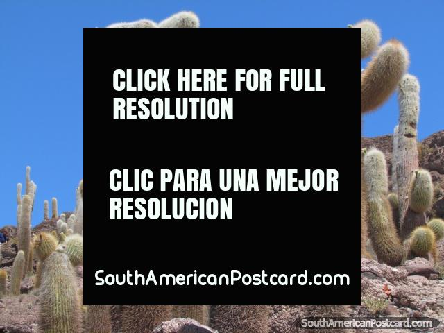 As formas de cacto, Salar de Uyuni. (640x480px). Bolívia, América do Sul.