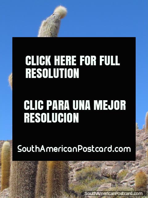 Montanha de cacto de Rocky em apartamentos de sal de Uyuni. (480x640px). Bolívia, América do Sul.