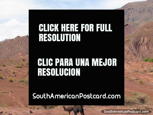 Un par de llamas y paisajes rocosos rojos entre Tica Tica y Potosi. (640x480px). Bolivia, Sudamerica.