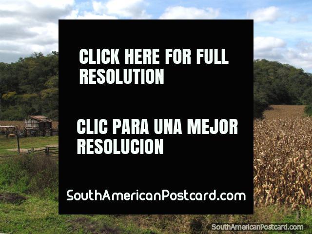 Farm, crops, fences and hills south of Santa Cruz. (640x480px). Bolivia, South America.