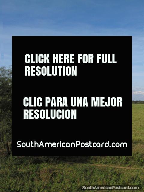 View of a big beautiful green field south of Santa Cruz. (480x640px). Bolivia, South America.