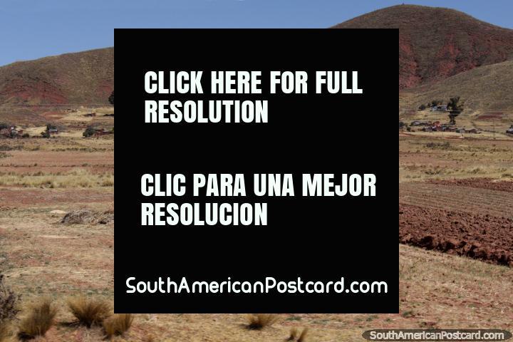 As montes de feno e a terra costumaram cultivar colheitas entre Desaguadero e Tiwanaku. (720x480px). Bolívia, América do Sul.