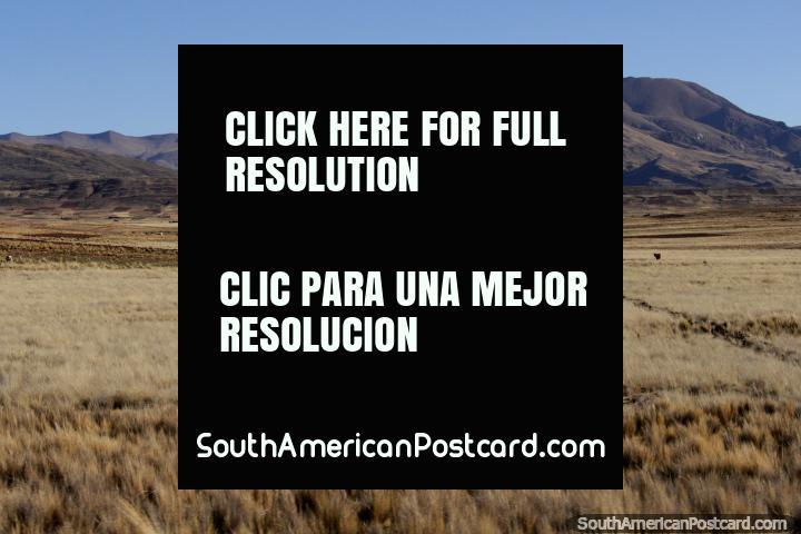 Las montañas y pastos en la carretera entre Tiahuanaco y La Paz. (720x480px). Bolivia, Sudamerica.