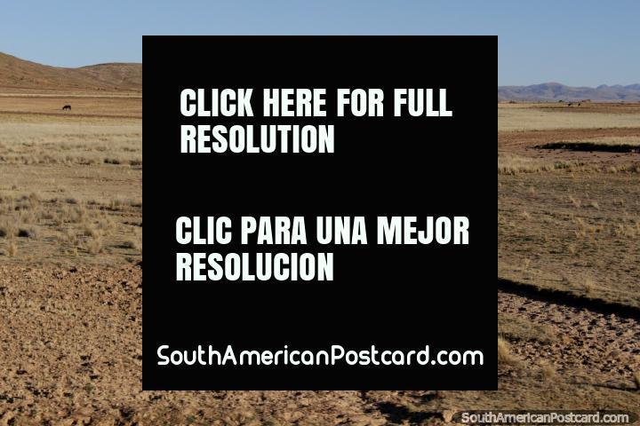 Basta pero hermoso terreno, colinas en la distancia, entre Tiahuanaco y La Paz. (720x480px). Bolivia, Sudamerica.