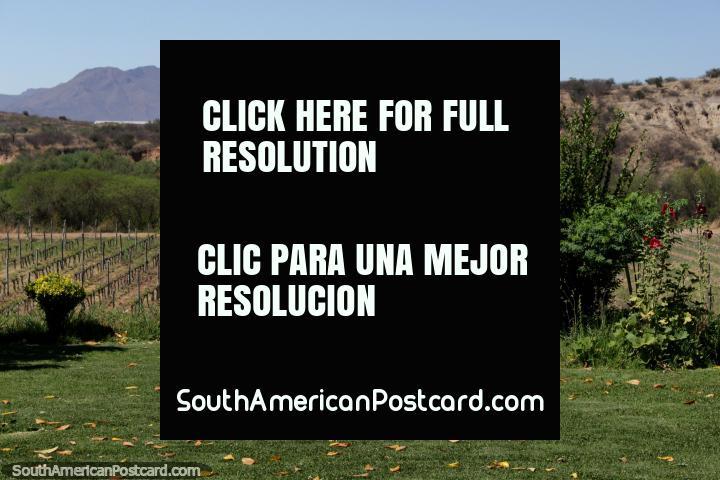 Lawns, gardens, vineyard and mountains, views of Tarija. (720x480px). Bolivia, South America.