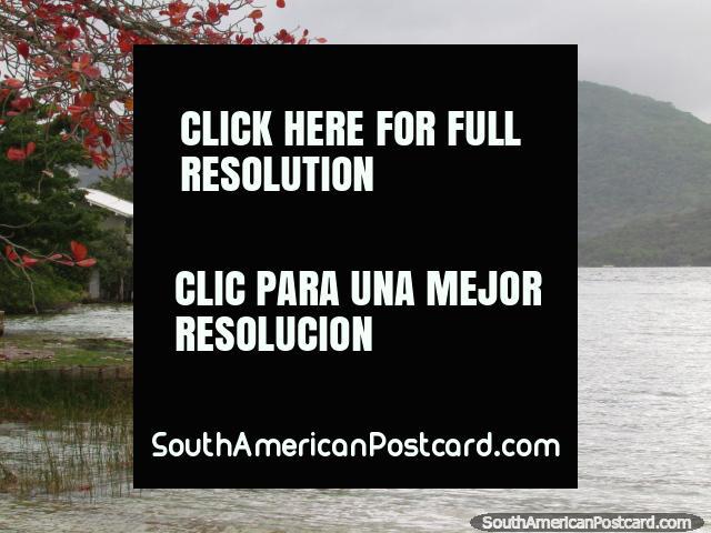 Una escena hermosa, hojas rojas, cañas en el agua, casa y colinas en Florianopolis. (640x480px). Brasil, Sudamerica.