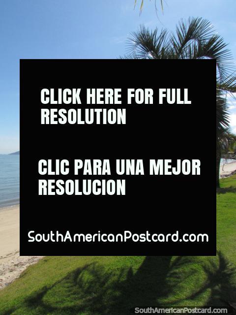 Palmas al borde de la hierba encima de la arena en una playa en el centro de Florianopolis. (480x640px). Brasil, Sudamerica.