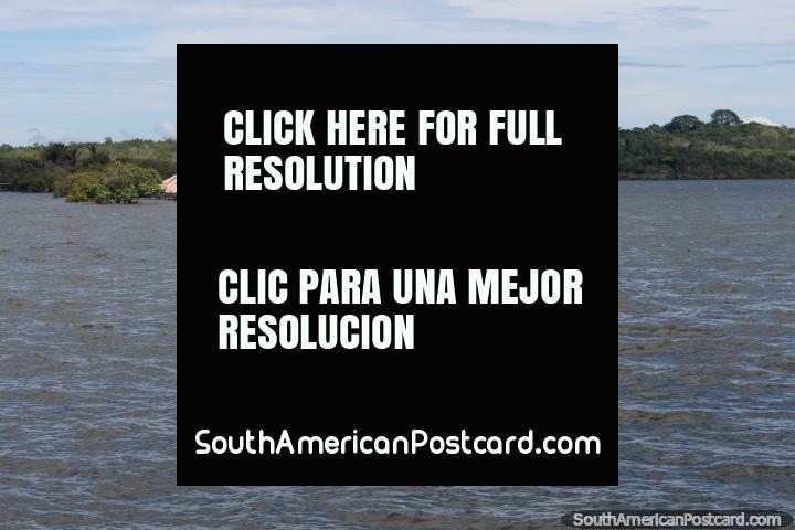 A ilha do Amor (Ilha fazem o Amor), submerso durante o março, vem entre o agosto-dezembro para sentir que o amor, para Alter do Chao perto de Santarem. (720x480px). Brasil, América do Sul.