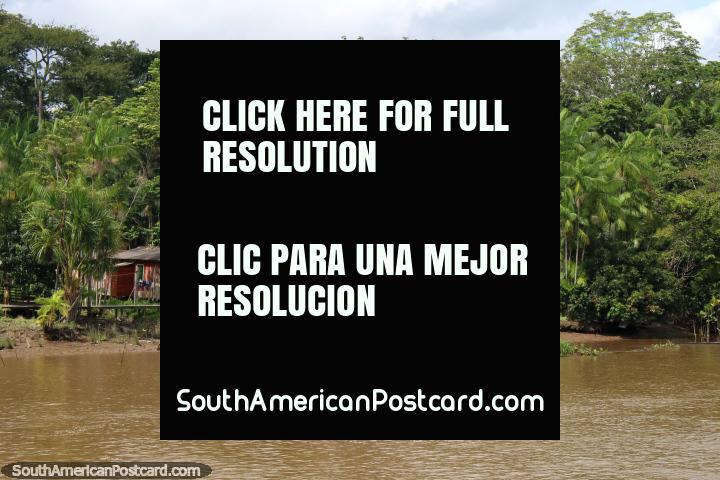 Uma casa com uma torre de água e coberta de rio no rio ao norte de Breves no Amazônia. (720x480px). Brasil, América do Sul.