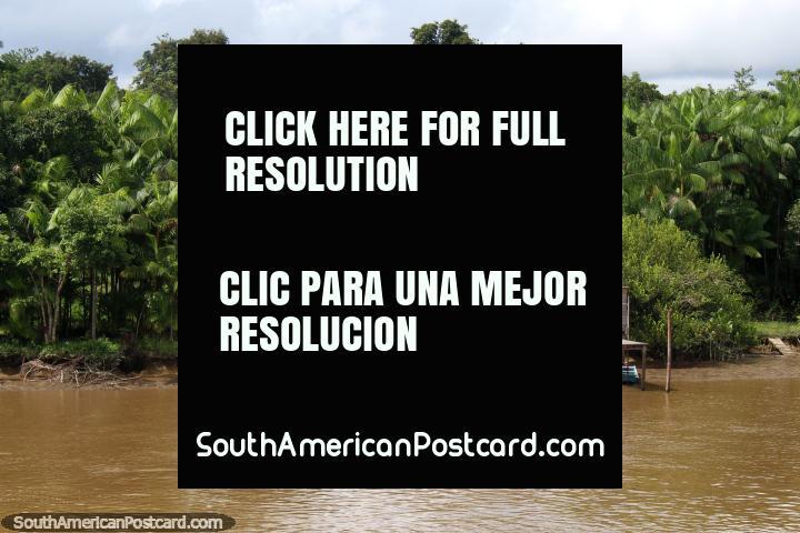 Casa rosada en el Amazonas rodeado de palmas verdes, al norte de Breves. (720x480px). Brasil, Sudamerica.
