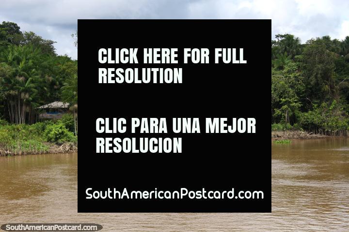 Casas a lo largo del Río Parauau, un barco atracado en el frente, al norte de Breves. (720x480px). Brasil, Sudamerica.