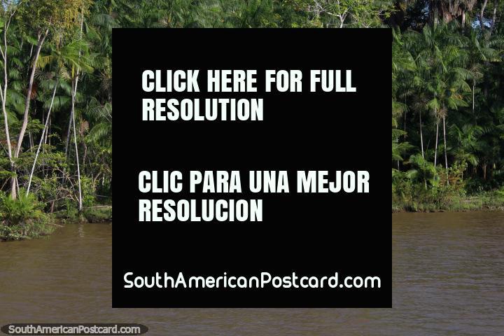 Un hombre vierte el agua fuera de su casa Amazon, canoa delante, al oeste de Belem. (720x480px). Brasil, Sudamerica.