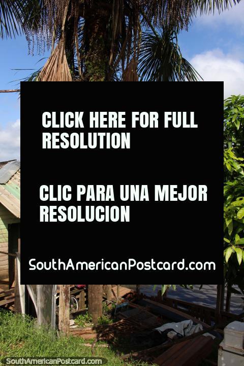 Palmeira e cabana na borda do Rio Oyapock em Oiapoque. (480x720px). Brasil, América do Sul.