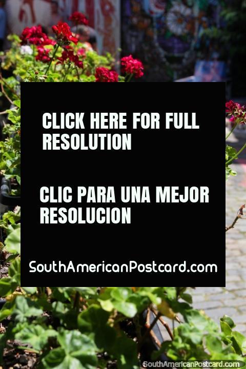 As flores vermelhas e rosa em Beco fazem Batman, acrescenta mais cor, São Paulo. (480x720px). Brasil, América do Sul.