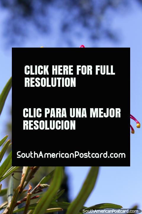 ¿Buscas empleo en Sao Paulo? ¡El Jardín Botánico es la respuesta! (480x720px). Brasil, Sudamerica.