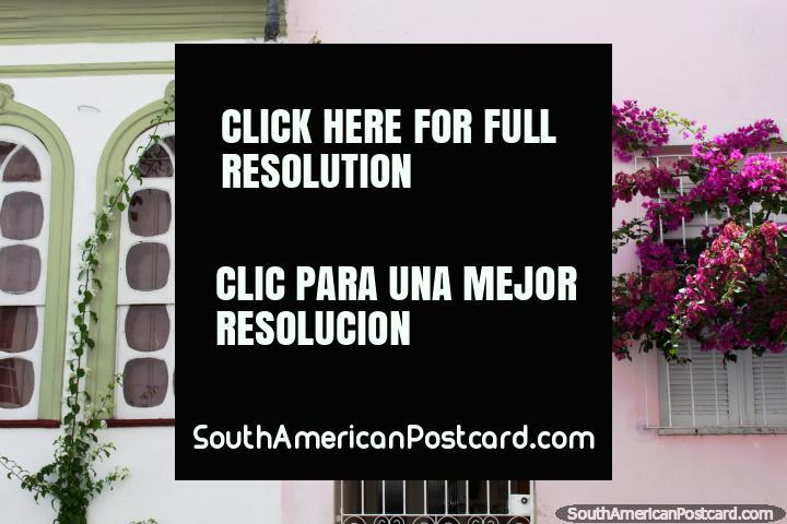 Janelas arcadas e flores purpúreas, fachada de casa no Salvador. (720x480px). Brasil, América do Sul.