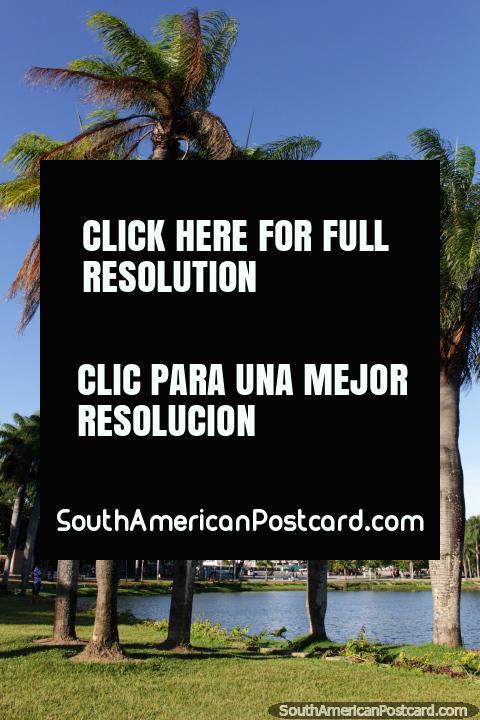 Lagoa Park, beautiful lagoon and palm trees in Joao Pessoa, worth a stopover. (480x720px). Brazil, South America.