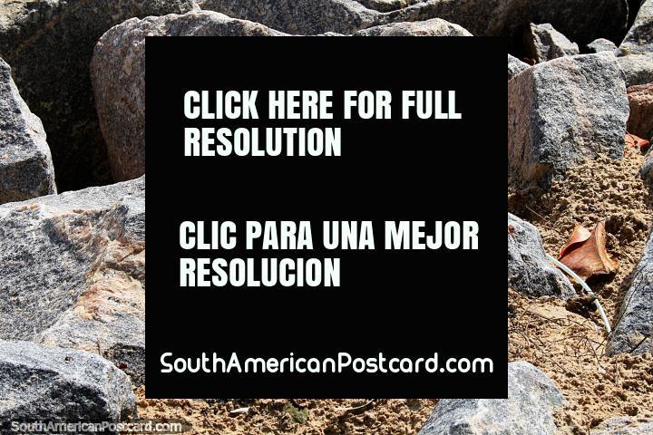 Pequeña iguana en rocas en la playa en Ponta Negra, Natal. (720x480px). Brasil, Sudamerica.