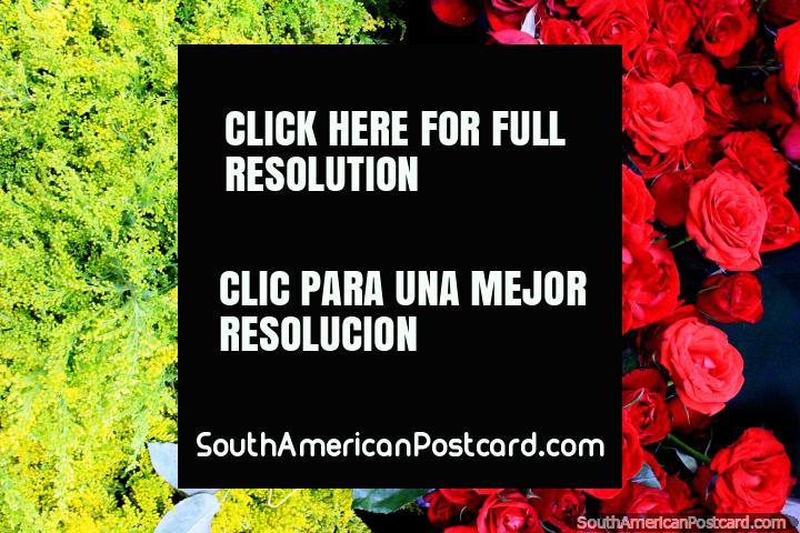 Verde claro y rojo oscuro, un color perfecto partido, flores en el Mercado Central en Belo Horizonte. (720x480px). Brasil, Sudamerica.