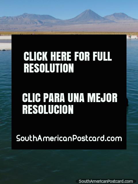 What a great day to swim at Laguna Cejar at San Pedro de Atacama. (480x640px). Chile, South America.