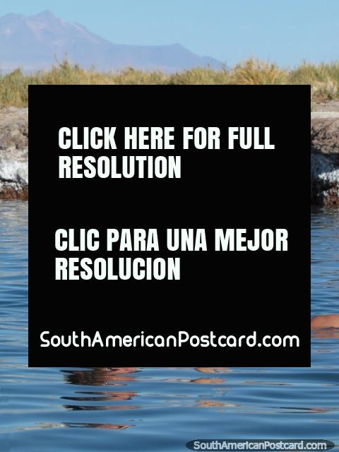 Woman enjoys a glass of wine while in the water at Cejar Lagoon at San Pedro de Atacama. (480x640px). Chile, South America.